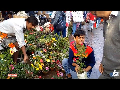 GALIFF STREET NURSERY PLANT MARKET KOLKATA INDIA