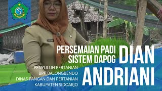 Download lagu Persemaian Padi Sistem Dapog - Dian Andriani STP - Penyuluh Pertanian BPP Balongbendo - Sidoarjo