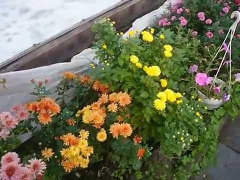 Вопрос: Можно ли сажать растения поздней осенью?