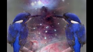 divine nature within mankind the myth of alcyone and ceyx