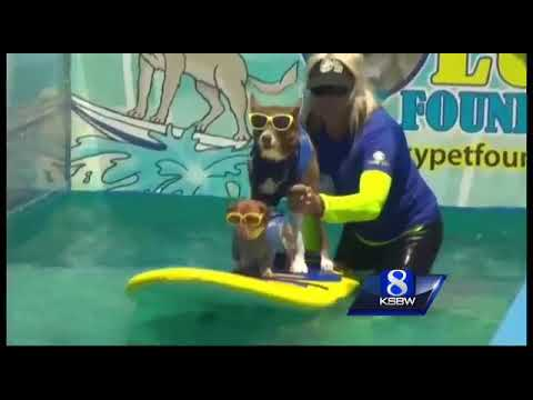 Surfing dog in waves