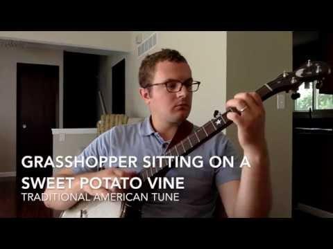 Grasshopper Sitting on a Sweet Potato Vine