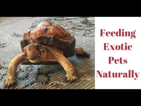 Introduction to Feeding Exotic Pets Naturally