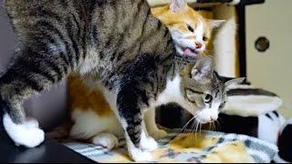 お尻くちゃい猫 - It Stinks! -
