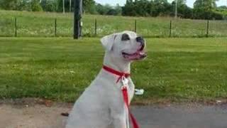 Go Boxer Rescue Video Mission Statement 2007