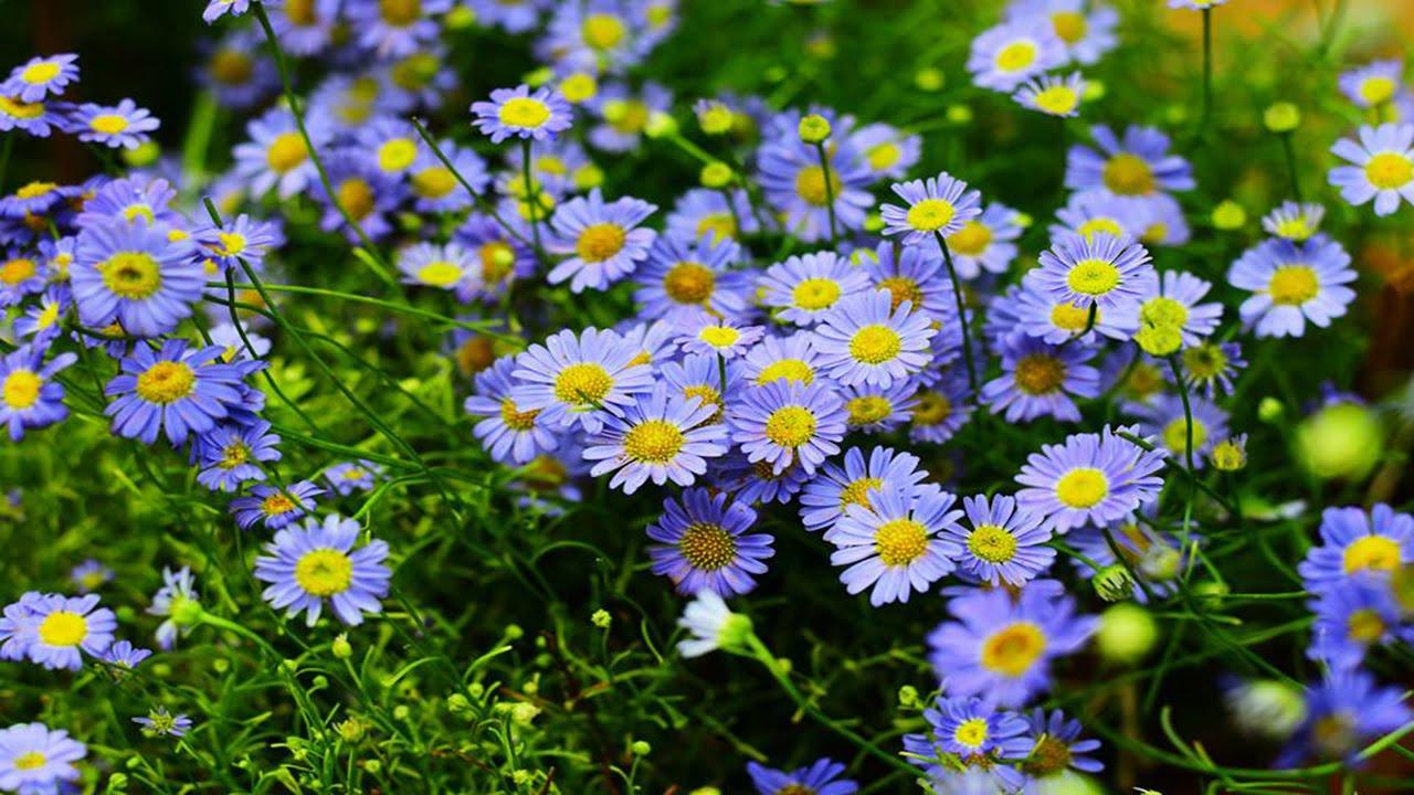 Monsoon flowers flowers blushing beautiful colourful flowers monsoon flowers flowers blushing beautiful colourful flowers izmirmasajfo