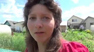 Выращивание клубники - мой опыт