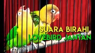 Download lagu MASTERAN SUARA BIRAHI LOVEBIRD JANTAN, AMPUH DAN EFEKTIF MEMANCING BIRAHI BUNYI || AUTO JEBOL BIRAHI