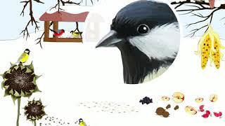 Mit Dem Richtigen Futter Viele Vögel Anlocken   MDR Garten