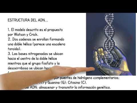 Resumen Estructura Y Función Del Adn