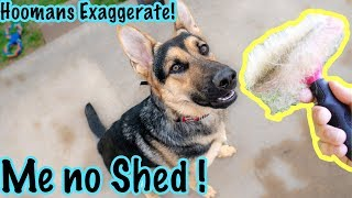 German Shepherds Don't Shed! #GermanShedders How to Deal With it.