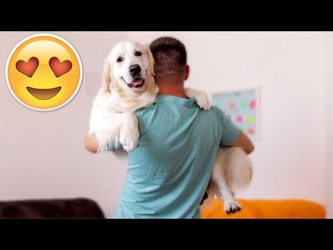 Carrying My Dog Like Baby - CHALLENGE [Cute Dog Reaction]