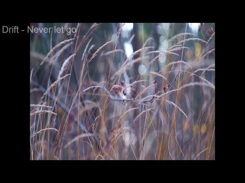Атмосферное видео осеннего леса