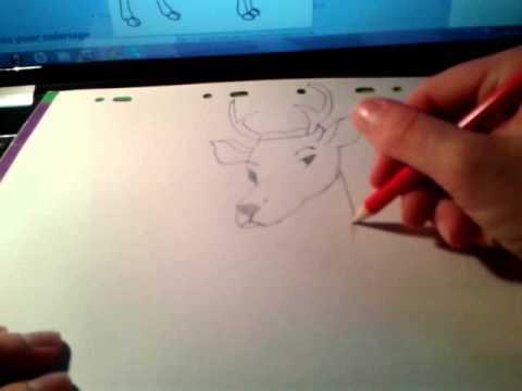 Dessin n 1 dessiner un cerf youtube - Dessiner un cerf ...