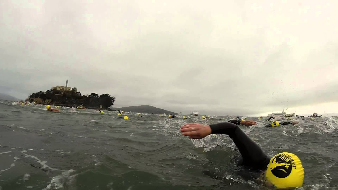 escape! what it's like to swim the alcatraz sharkfest race - youtube