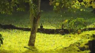 Yellow Poui 2011