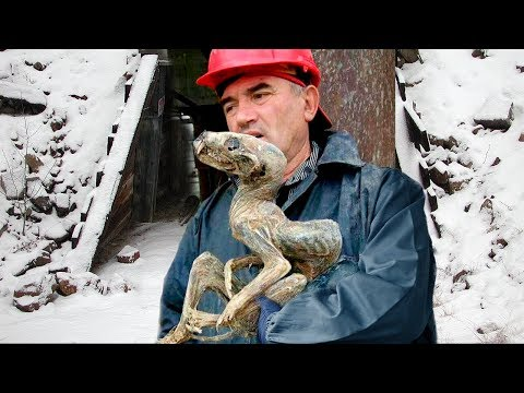 9 Bizarre Creatures People Thought Were Fake, But Aren't!