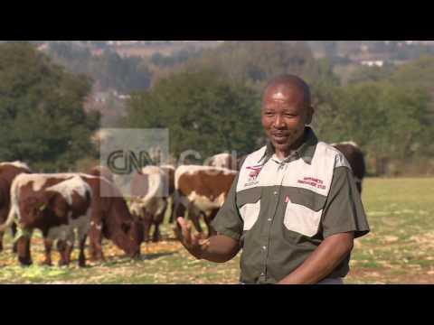 S AFRICA:CASH COW FARM