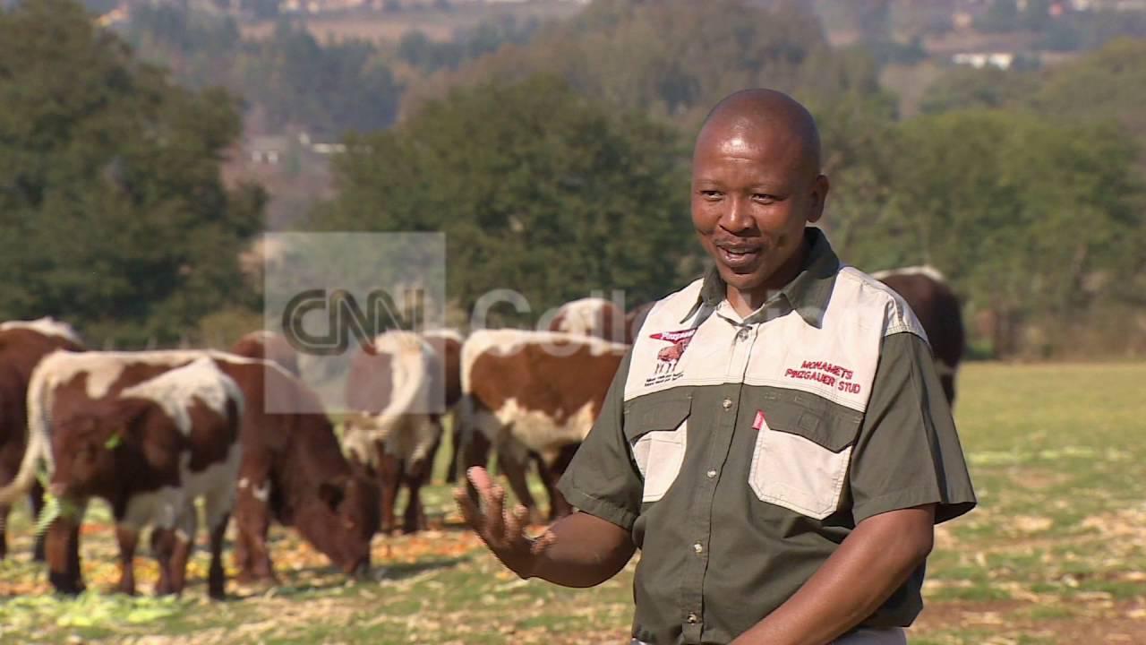 S Africa Cash Cow Farm Youtube