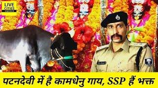 Patna के बड़ी पटनदेवी मंदिर में है कामधेनु गाय, Bihar के पूर्व DGP से Patna के SSP तक हैं भक्त