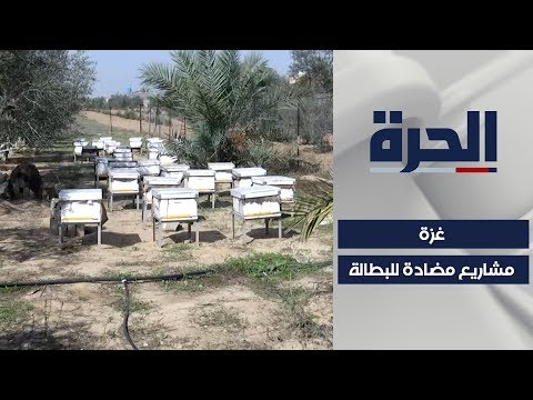غزة.. مشاريع خاصة تبعد شبح البطالة عن الشباب  - 02:58-2019 / 11 / 19