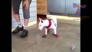 Коты и собаки в тапочках. Cats and dogs wearing shoes