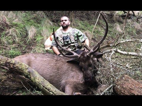 Sambar Deer Hunting Australia - Freezer Filler