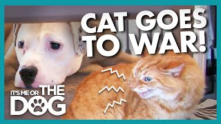 Endless Slap Fights with Dog have Caused this Cat to Flee the Bedroom | It's Me or the Dog