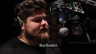 Blue Bluebird vs. Blue Kiwi (Male) | VO Mic Comparison