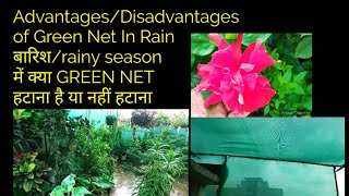 बारिश/rainy season में क्या GREEN NET हटाना है या नहीं हटाना Advantages/Disadvantages of Net In Rain