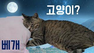 베개 베고 자는 고양이