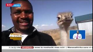 Tabia za wanyama wanapokutana na binadamu, Waiguru akisakata ngoma | Mirindimo