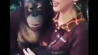 Try Not to Laugh   Cute Funny Animals Compilation 360