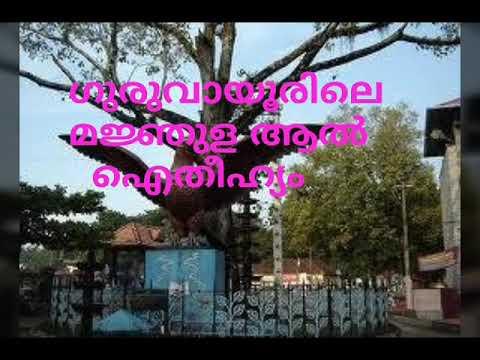 MANJULA AAL, മജ്ഞുള ആൽ ,guruvayoor temple aal history, manjula aal guruvayoor