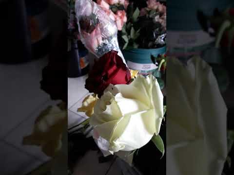 Какая температура должна быть в холодильнике для роз