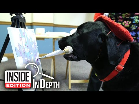 The Woody Show - Dog Makes $1,000s Painting and Helping Kids