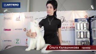 Груминг Кошки. Ольга Калашникова.