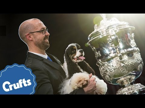 CRUFTS 2018 IS COMING!
