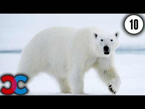 10 Amazing Animals in Danger of Extinction