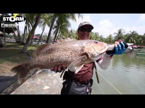 FishingKaki.com - Storm Trickster Rod
