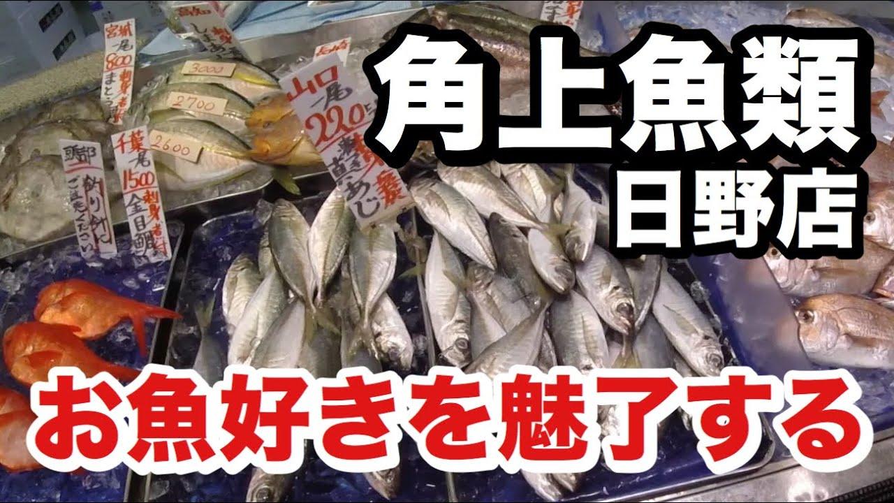 日野 角 上 魚類