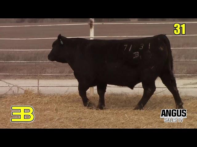 Benoit Angus Lot 31