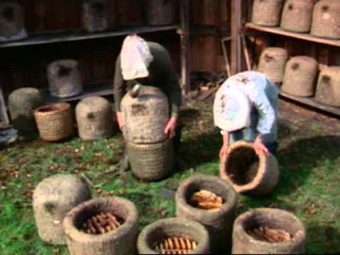 6  Autumn work in a heather skep apiary E2790