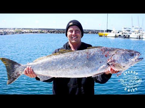 Channel Islands - WHITE SEA BASS & YELLOWTAIL Fishing