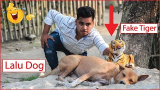 Fake Tiger Prank TRY TO NOT LAUGH CHALLENGE MUST WATCH NEW Funny Prank Videos 2020||New Dog Reaction