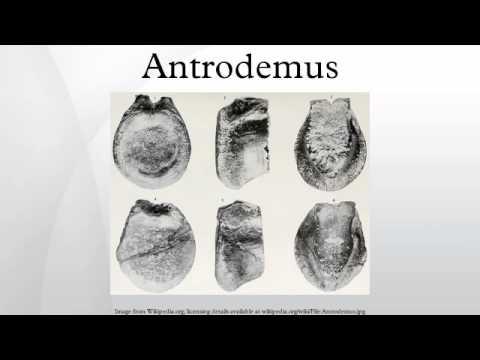 Antrodemus