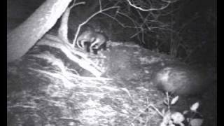 WildPlaces TV - schoolchildren present a programme on nocturnal animals