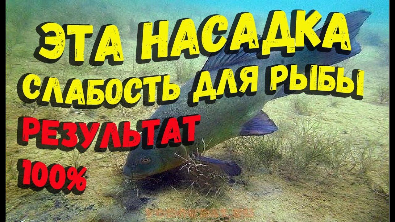 Рецепт насадки для рыбалки рыба не сможет проплыть мимо