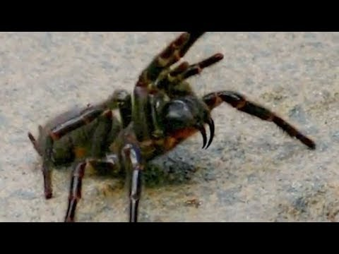 13 Animals That Create Unusual SWARMS