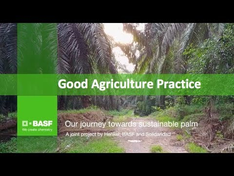 The Future Of Sustainable Palm Oil – Good Agricultural Practices